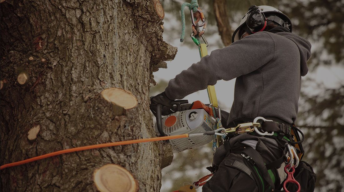 Rocky Top Tree Services: Stump and tree removal in Morganton, Lenoir and Hickory