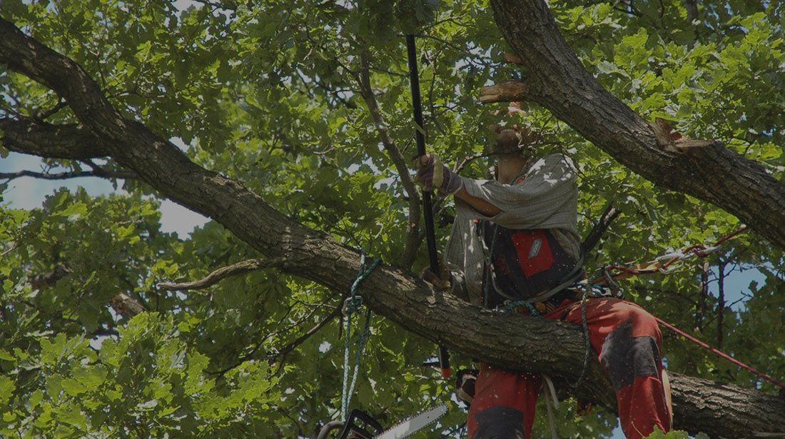 Rocky Top Tree Services: Tree cabling and bracing in Morganton, Lenoir and Hickory