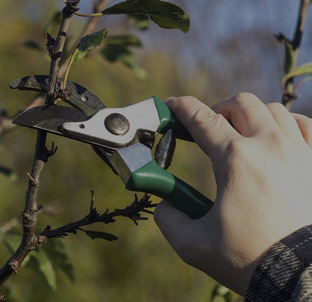 Rocky Top Tree Services: Tree pruning in Morganton, Lenoir and Hickory